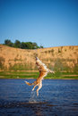 Happy dog jumping up in the water border collie Stock Photo