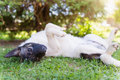 Happy dog lying on back in grass with extending paw Royalty Free Stock Photo