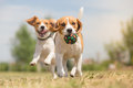 Happy dogs having fun with ball Royalty Free Stock Image