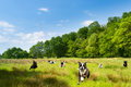 Happy dogs romping in a field Stock Images
