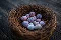 Happy Easter candy easter eggs in birds nest Royalty Free Stock Photo