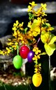 Happy easter eggs and flowers colored outdoors in sunlight Stock Photos