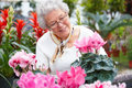 Happy elderly woman looking at pink flowers Royalty Free Stock Image