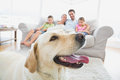Happy family sitting on couch with their pet yellow labrador in foreground at home the living room Stock Image