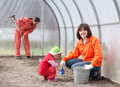 Happy family works in greenhouse Royalty Free Stock Image