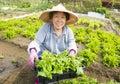 Happy female Senior farmer working in vegetables farm