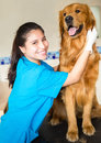 Happy female vet examining beautiful dog Royalty Free Stock Image