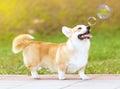 Feliz perro y jabón