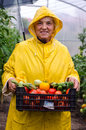 Happy gardener with crops woman holding box of vegetables Royalty Free Stock Images