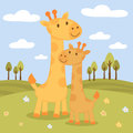 Happy giraffes family Royalty Free Stock Photography