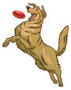 Happy golden retriever dog playing flying disc Royalty Free Stock Photo