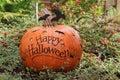 Happy Halloween pumpkin Royalty Free Stock Photo