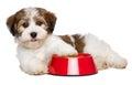 Felice cane ciotola di cane cibo
