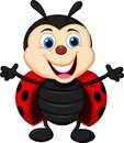 Happy ladybug cartoon illustration of Royalty Free Stock Image