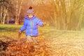 Happy little boy fun in autumn fall leaves