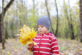 Happy little boy with maple leaflets looks at it yellow shallow depth of field Royalty Free Stock Photography