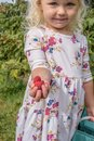 Little blonde girl picking raspberries Royalty Free Stock Photo