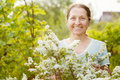 Happy mature gardener Stock Image