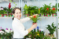 Happy mature woman with cyclamen plant in flower store Stock Photography