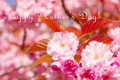 Happy mother s day greeting card or background for with flower Stock Photography