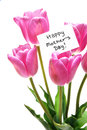 Happy mothers day tag bunch purple tulips Royalty Free Stock Photography