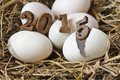Happy new year eggs concept on a nest of hay Stock Photo