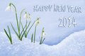 Happy new year greeting card group of snowdrops Royalty Free Stock Photo