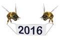 Happy New, 2016, Year! Royalty Free Stock Photo