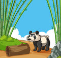 Happy panda in bamboo forest