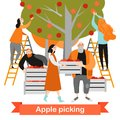 Happy people are picking apples in the garden. Harvest time. Royalty Free Stock Photo