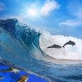 Šťastný hravý delfíny skákanie na rozbíjanie vlna