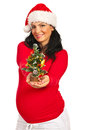 Happy pregnant woman giving Xmas tree Stock Image