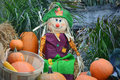Happy Scarecrow with Pumpkin Display Royalty Free Stock Photo