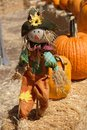 A happy scarecrow in the pumpkin patch Royalty Free Stock Photo
