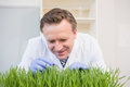 Happy scientist examining grass in the laboratory Stock Image