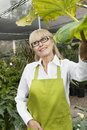 Happy senior woman gardener standing in greenhouse while looking away Royalty Free Stock Photography