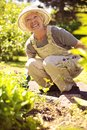 Happy senior woman gardening happily working with plants in her garden old in backyard Stock Image