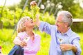 Happy seniors having picnic drinking wine senior couple of men and women on summer meadow in vineyard he spoils his wife with Royalty Free Stock Photo