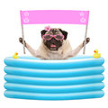 Happy summer pug dog with sunglasses and blank pink banner sign in inflatable poo Royalty Free Stock Photo