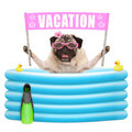 Happy summer pug dog with sunglasses and pink banner sign with text vacation  in inflatable pool Royalty Free Stock Photo