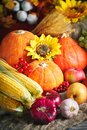 Happy Thanksgiving Day background, wooden table decorated with Pumpkins, Maize, fruits and autumn leaves. Harvest Royalty Free Stock Photo