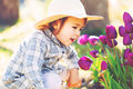 Happy toddler girl in a hat playing with purple tulips Royalty Free Stock Photo