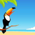 Happy toucan bird sitting on a branch with simple tropical beach background Royalty Free Stock Photos