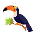 A happy tucano toco on a branch smiling Stock Photography