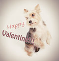 Happy valentine dog Royalty Free Stock Photo