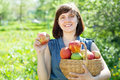 Happy  woman with apple harvest Stock Photography