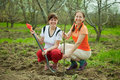 Happy women planting fruit tree Royalty Free Stock Images