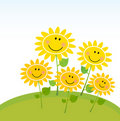 Happy Yellow Spring Sunflowers In Garden Royalty Free Stock Image