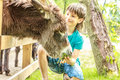 Happy young boy feeding donkey on farm Royalty Free Stock Photo