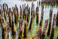 Harbor pilings abandoned dock protrude from the seafloor in portland maine s Stock Image